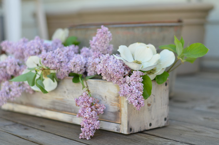 How to Propagate Lilacs from cuttings, FlowerPatchFarmhouse.com