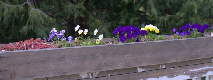 DIY Fence Board Planters, window boxes, FlowerPatchFarmhouse.com