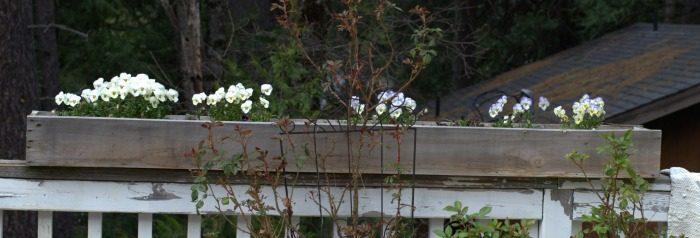 DIY Planter boxes from Cedar Fence Boards, window planters, FlowerPatchFarmhouse.com