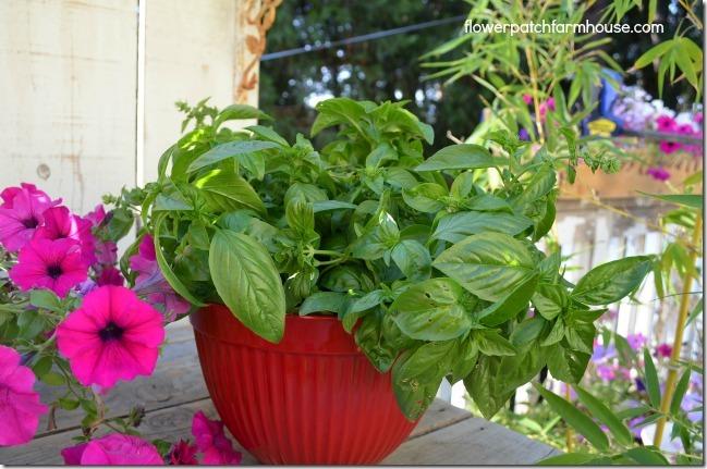 Basil in red bowl ready to make homemade basil pesto