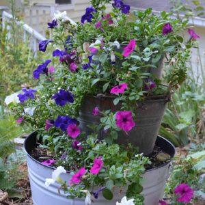 buckets-of-flowers-6.jpg