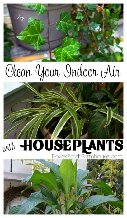 Scrub the air in your home, naturally! Great for allergy sufferers and those that want more oxygen to breathe. FlowerPatchFarmhouse.com