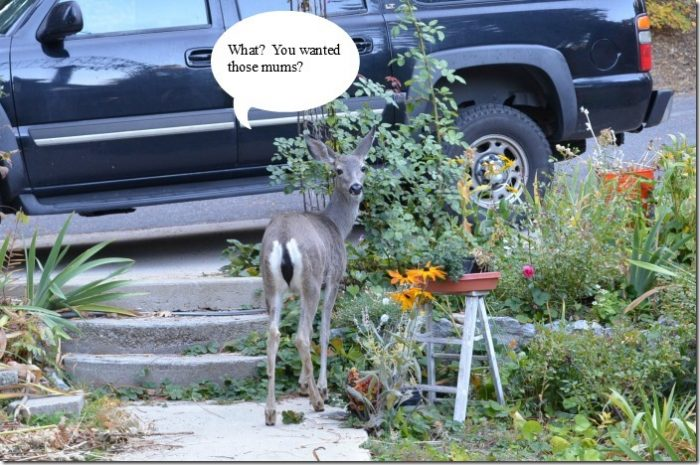 Deer at bird bath Ladder