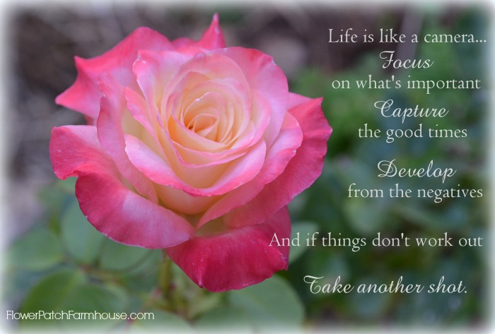 A Fabulous Monday And An Inspirational Quote Flower