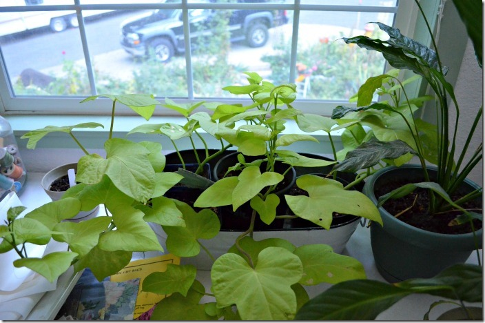 Overwinter your Favorite Plants