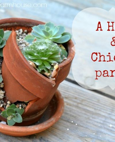 Sempervivum Hens and Chicks