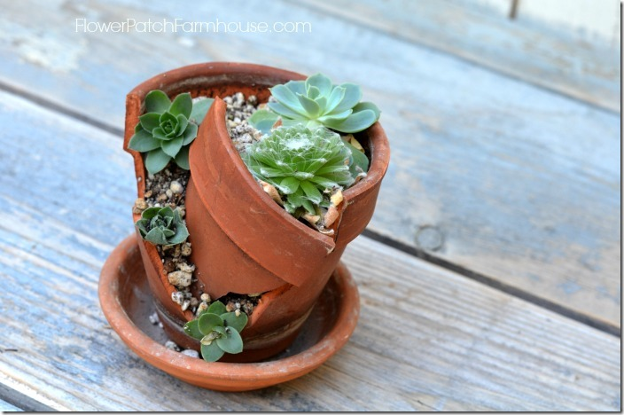 potted chicks3