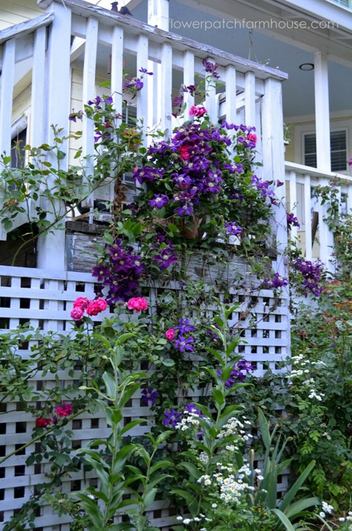 Prune Clematis for Top to Bottom Bloom