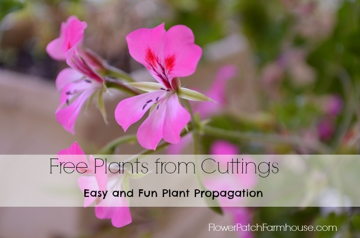 free plants from cuttings