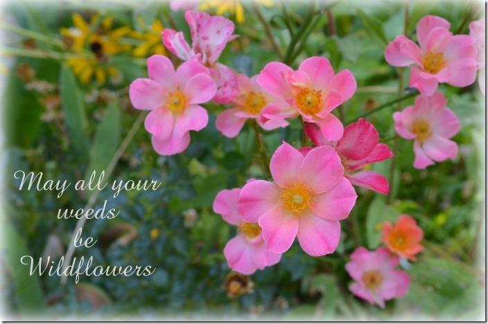 weeds be wildflowers1