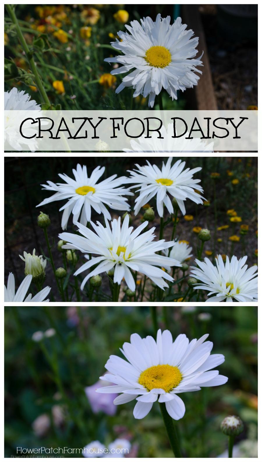 Приват записи crazydaisy 13 фотография