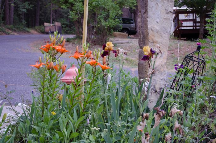 oriental lilies and iris
