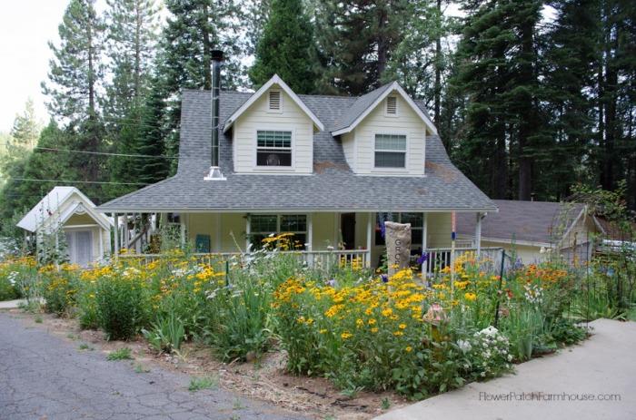 Black-Eyed-Susans-front-FlowerPatchFarmhouse.com_.jpg