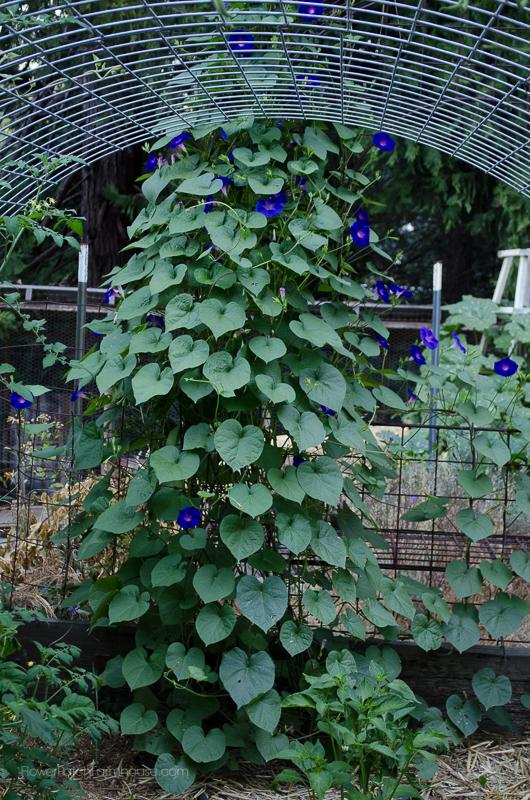DIY Greenhouse Arbor 2, FlowerPatchFarmhouse.com (4 of 12)