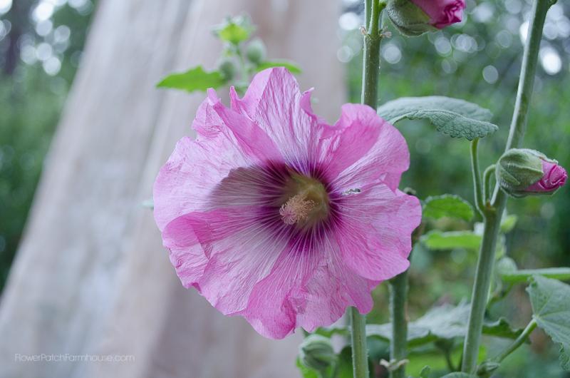 DIY Greenhouse Arbor 2, FlowerPatchFarmhouse.com (9 of 12)