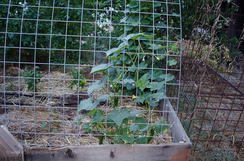 DIY Greenhouse Arbor, FlowerPatchFarmhouse.com (1 of 8)