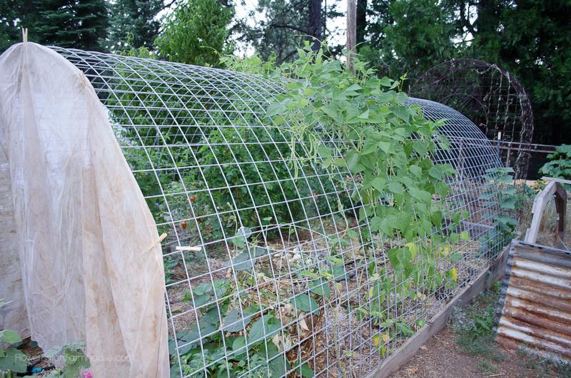 DIY Greenhouse Arbor, FlowerPatchFarmhouse.com (2 of 8)