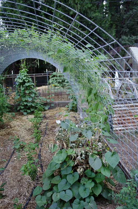 DIY Greenhouse Arbor, FlowerPatchFarmhouse.com (4 of 8)