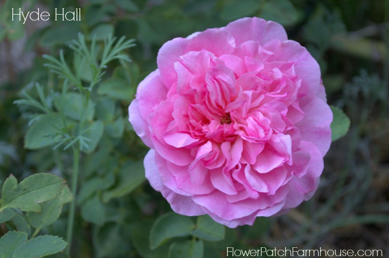 Hyde Hall, FlowerPatchFarmhouse.com