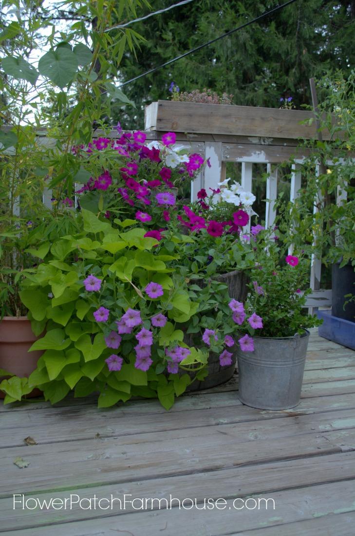 fabulous barrel, FlowerPatchFarmhouse.com