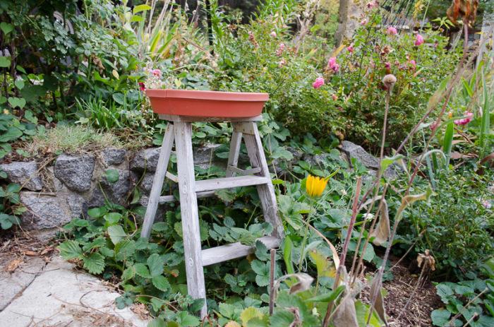 Farmhouse ladder1, FlowerPatchFarmhouse.com (2 of 8)