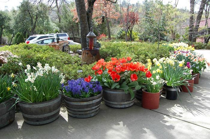 Barrels, Ironstone Vineyard, FlowerPatchFarmhouse.com