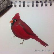 How to Paint a Cardinal Bird