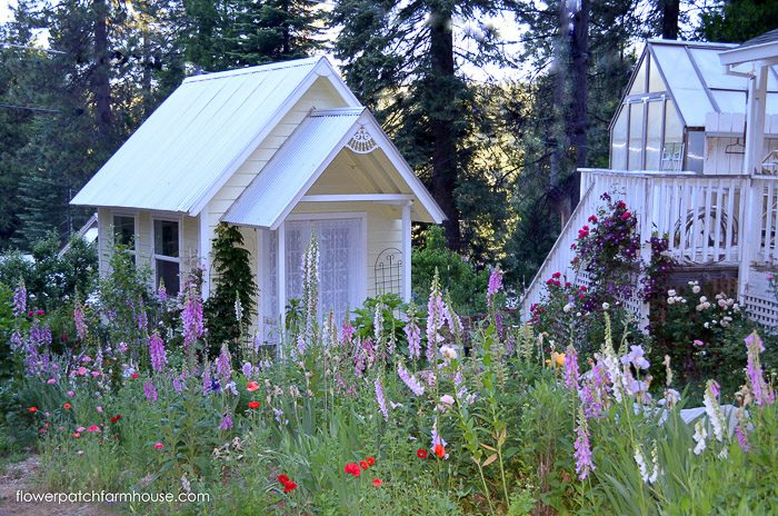How to grow Foxgloves in your Cottage Garden, FlowerPatchFarmhouse.com
