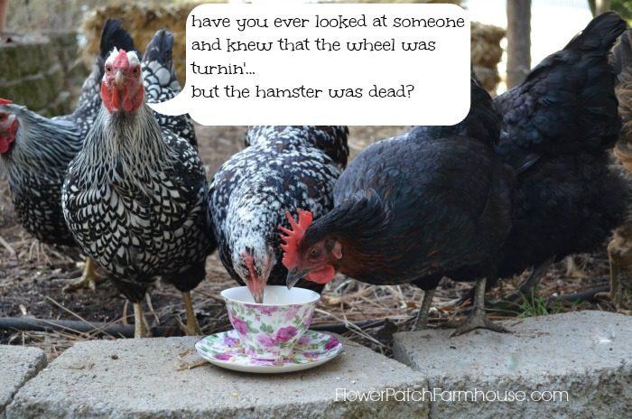 hamster was dead quote, FlowerPatchFarmhouse.com