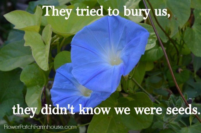 They Tried to Bury Us Inspirational Quote, FlowerPatchFarmhouse.com