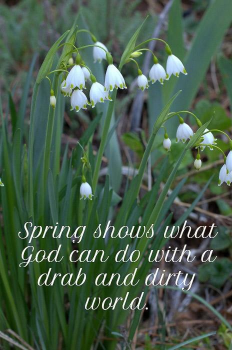 Spring Inspiration, Summer Snowflake, FlowerPatchFarmhouse.com