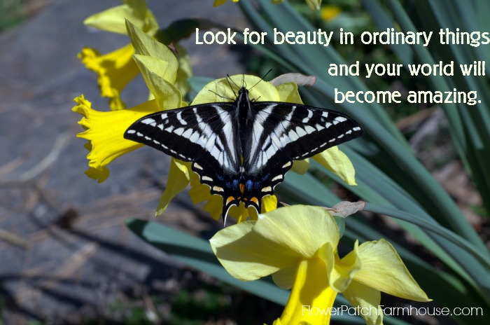 Look for Beauty Inspirational Quote, FlowerPatchFarmhouse.com