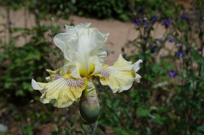 Carols Garden, FlowerPatchFarmhouse.com (42 of 60)