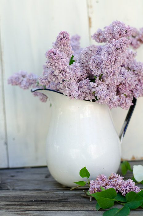 Rooting lilacs, easy and fragrant fun, FlowerPatchFarmhouse.com