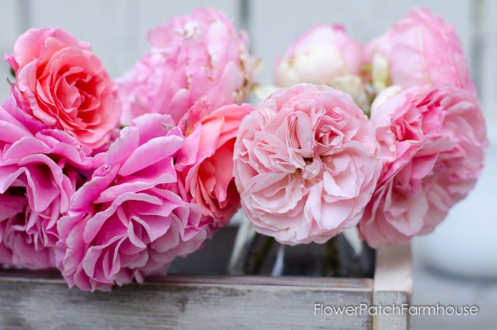 all about roses, propagate, grow and prune. FlowerPatchFarmhouse.com