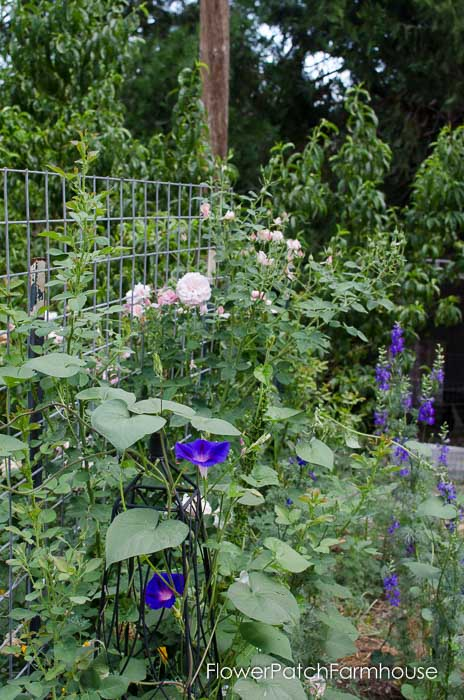Secret garden back fence, FlowerPatchFarmhouse.com