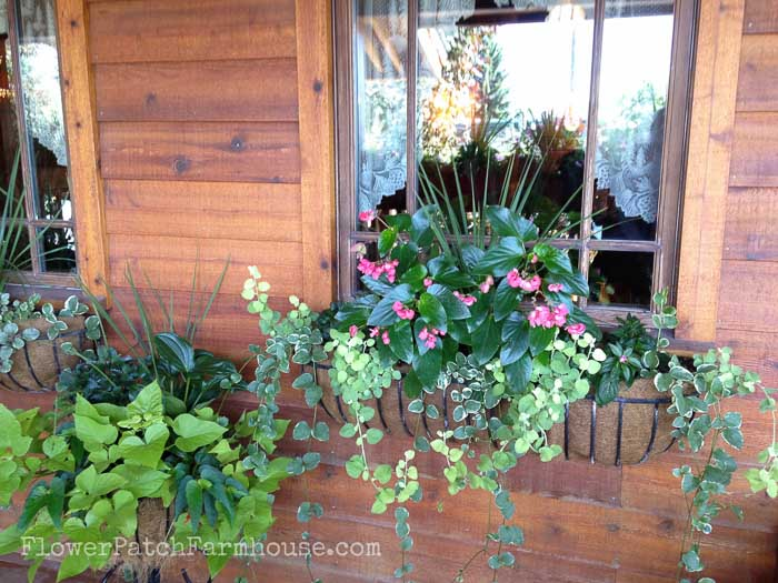 Shade Loving plants you can grow in containers and brighten up those dark spots!