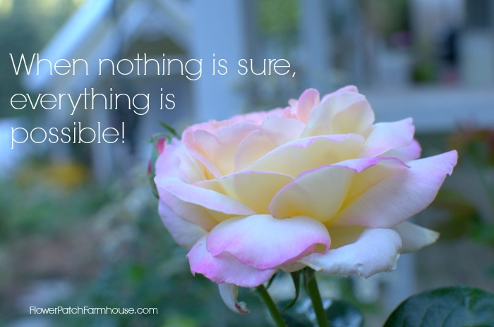 Peace Rose with When Nothing is Sure, Everything is Possible inspirational quote