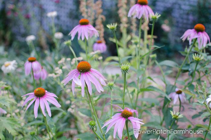 Garden Tour Aug 2, 2015, FlowerPatchFarmhouse.com (20 of 40)