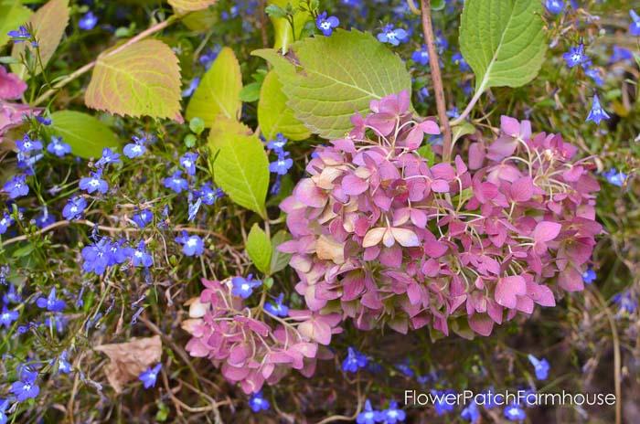 September 19 garden walk, FlowerPatchFarmhouse.com-0027