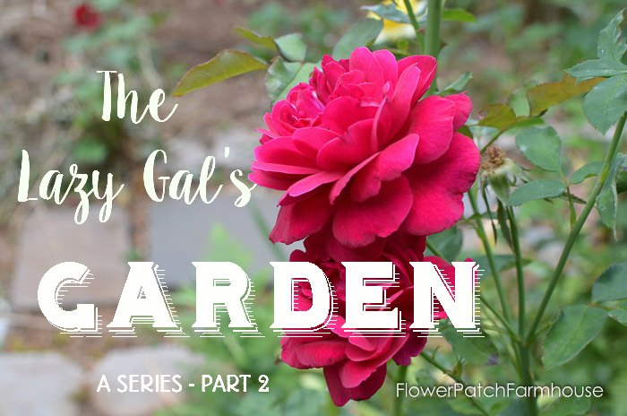 Lazy Gal's Garden Guide Part 2, a gardening how to series for the lazy or limited gardener. FlowerPatchFarmhouse.com