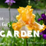 Lazy Gal's Garden Guide – Part 3