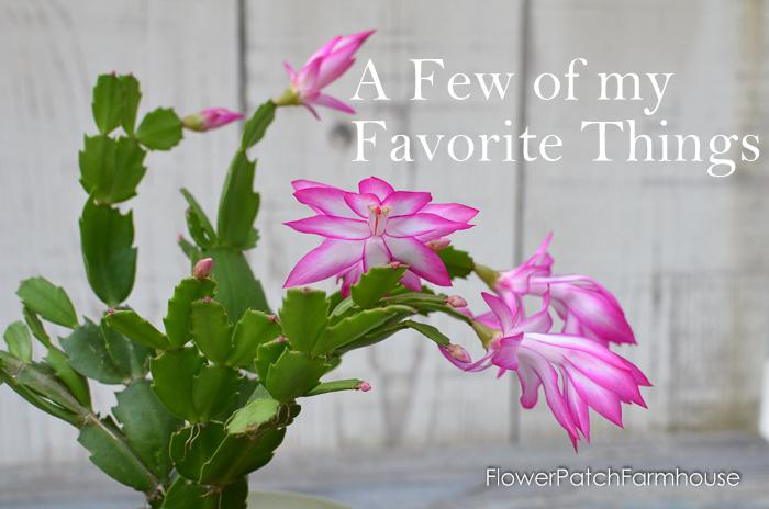 Thanksgiving Cactus, FlowerPatchFarmhouse.com