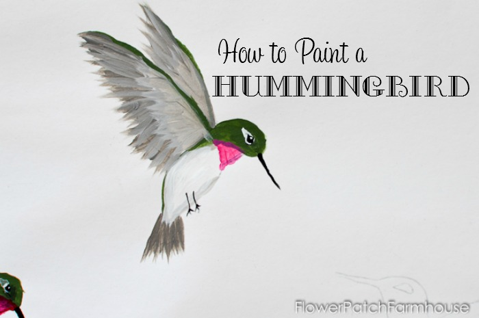 hummingbirds and flowers video