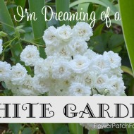 I'm Dreaming of a White Garden