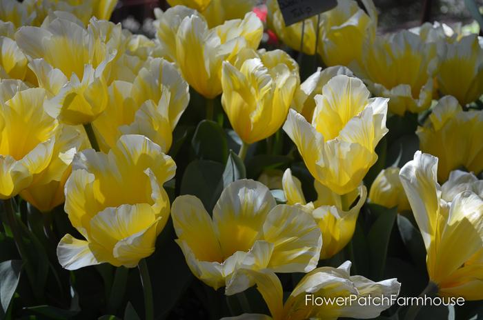 Ironstone March 2016, FlowerPatchFarmhouse.com (66 of 77)