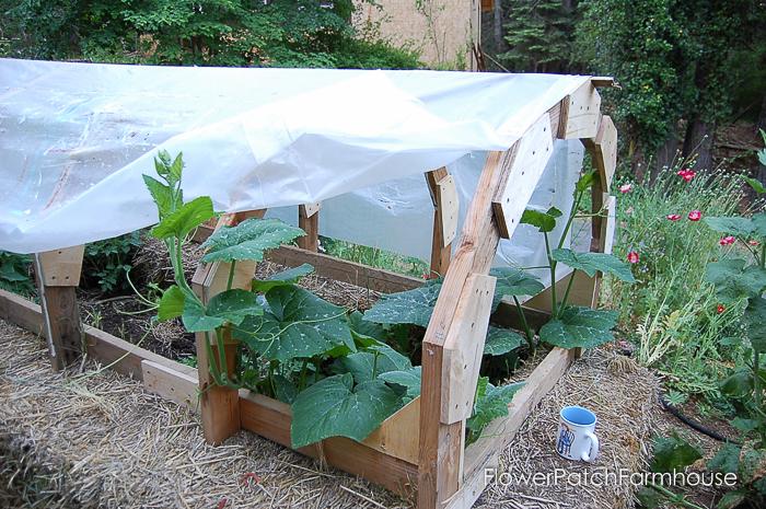 Straw bale garden hot bed, FlowerPatchFarmhouse.com