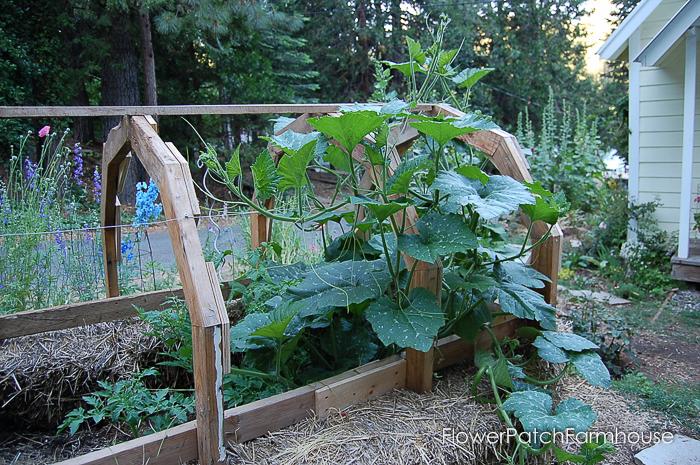 Strawbale Hotbed, FlowerPatchFarmhouse.com (14 of 16)