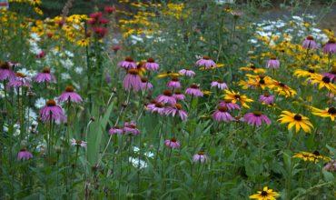 Plant Your Cottage Garden for Continuous Color