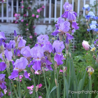 Compost for a Beautiful Garden